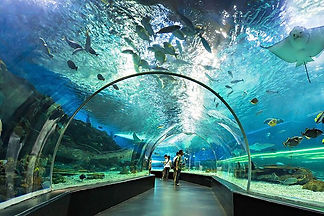 MANILA OCEAN PARK.jpg