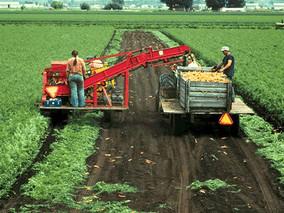 Chương trình định cư Canada cho lao động nông nghiệp và thực phẩm