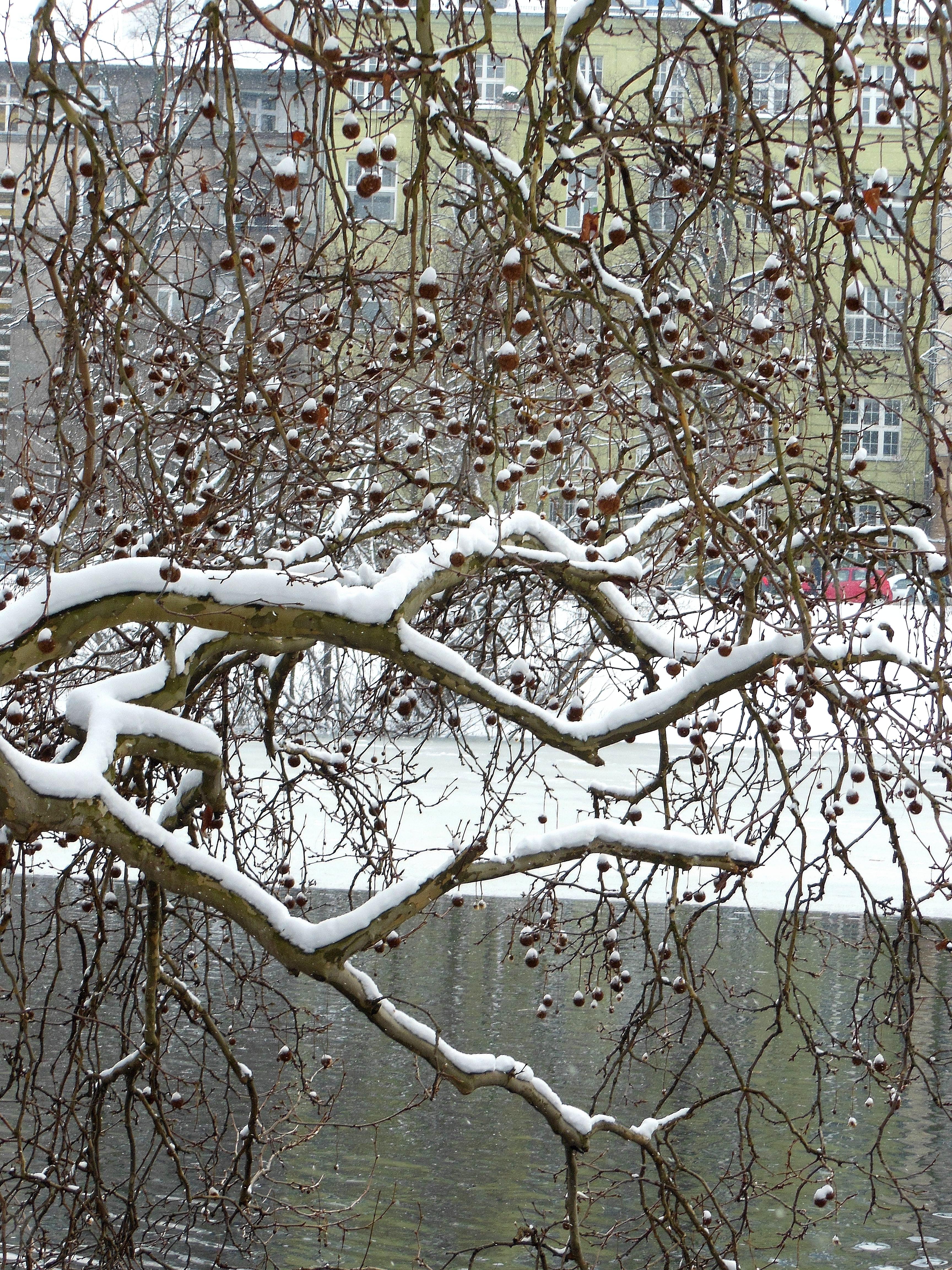 snow in berlin.jpg