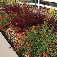 Mixed texture plantings