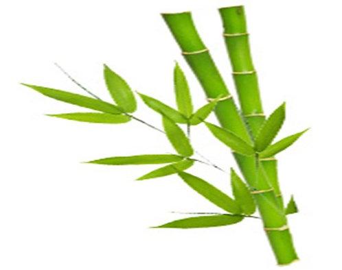 Hydrolat de Bambou
