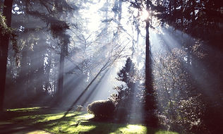 Rays of light piercing through trees