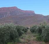 Mount Ceder Kalamata Olive Grove
