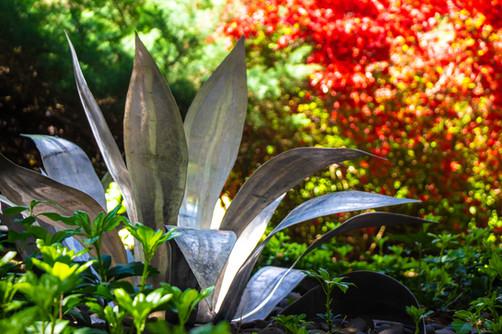 agave trio-5236 copy.jpg