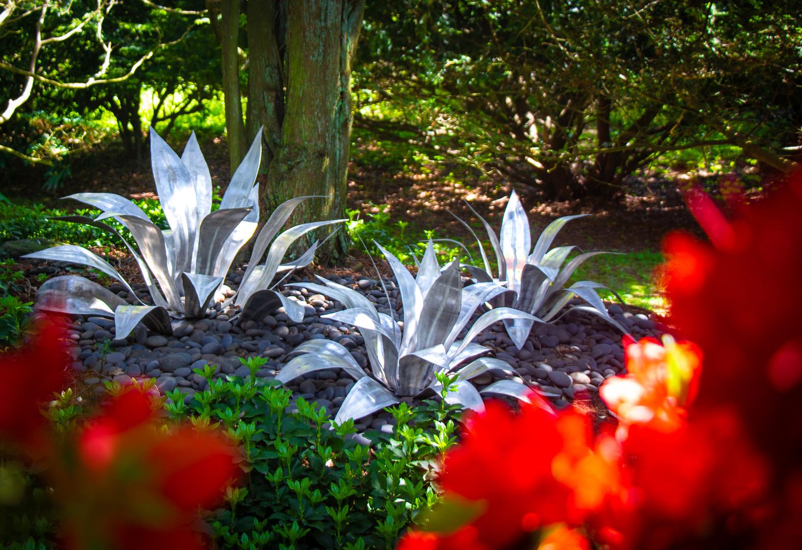 agave trio-5239 copy.jpg