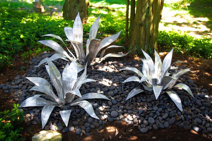 agave trio-5233 copy.jpg