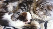 Les 8 signes qui prouvent que votre chat vous aime