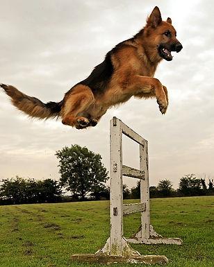 dog-training-san-diego3_edited_edited.jp