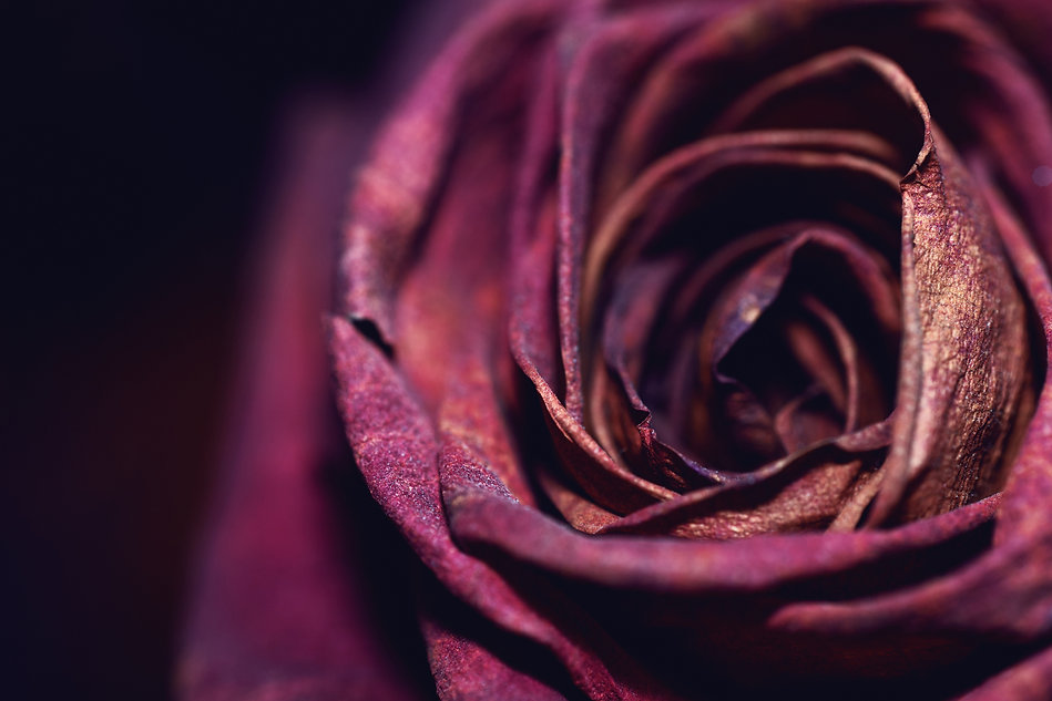 ROSE 2.0.jpg