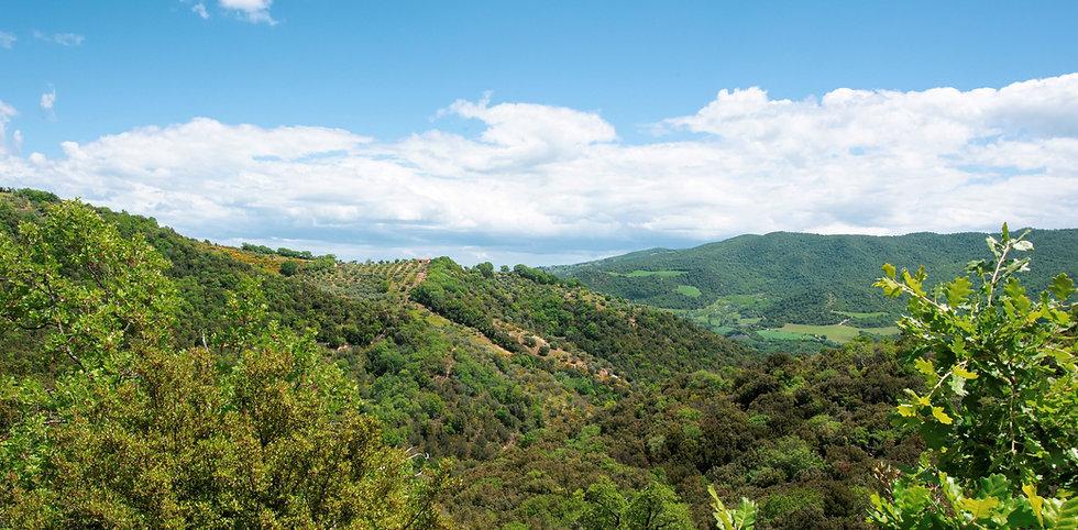 panorama da foresta.jpg