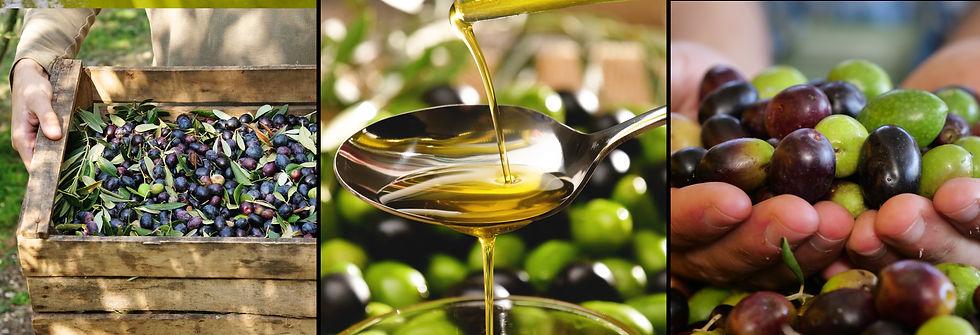 Olio e olive.jpeg