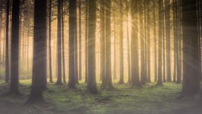 Hüter des Waldes | Channeling