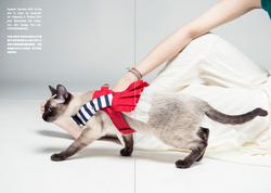 Orange Blinks pets fashion 2015s/s