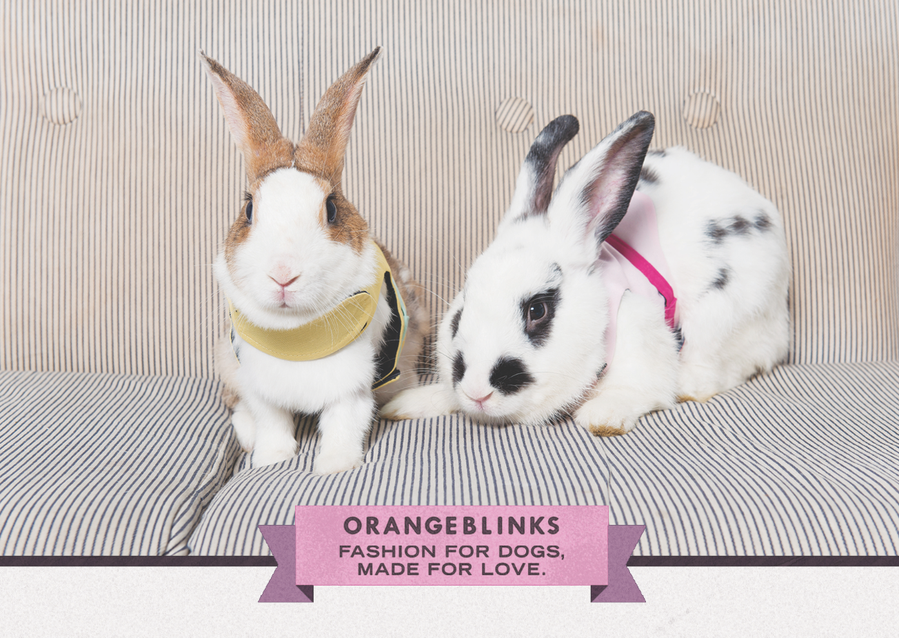 Orange Blinks pets fashion