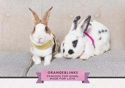 Orange Blinks pets fashion