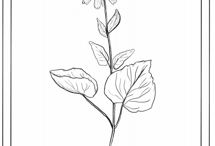 Wild Herbal Colouring Pages