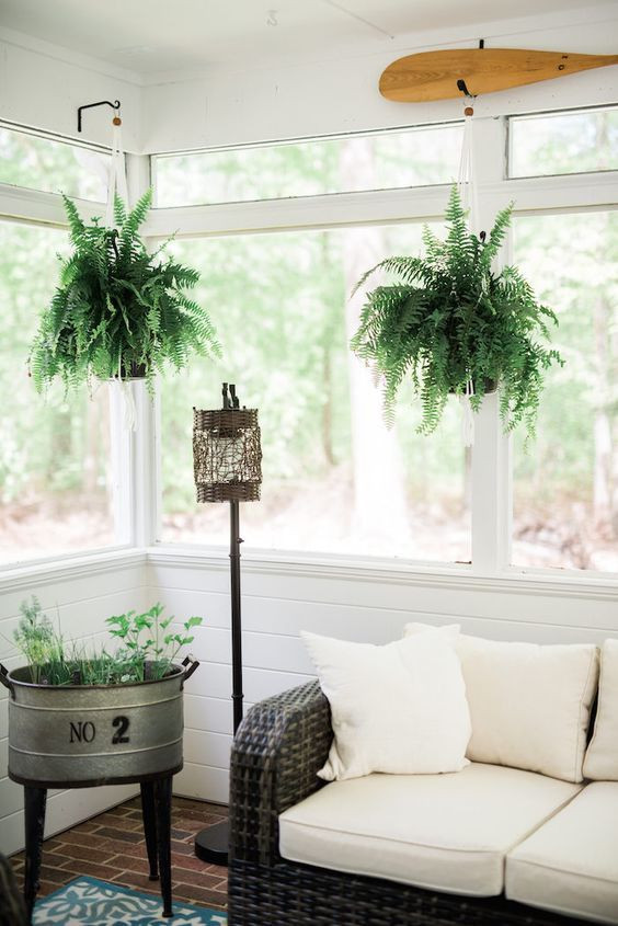 7 Gorgeous Indoor Hanging Houseplants