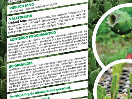 Acija promove palestra sobre as Sementeiras de Palmas