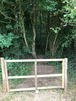 Into Whistley Coppice