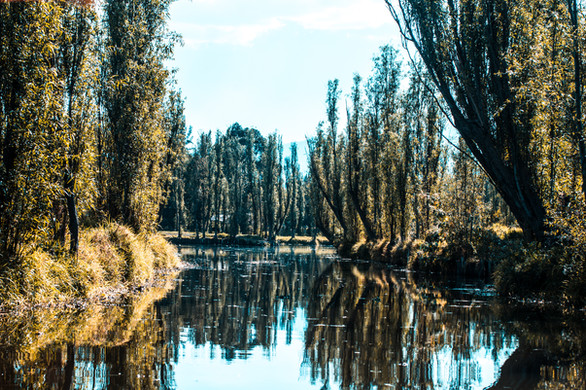 The Xochimilco canals are a sight to beh
