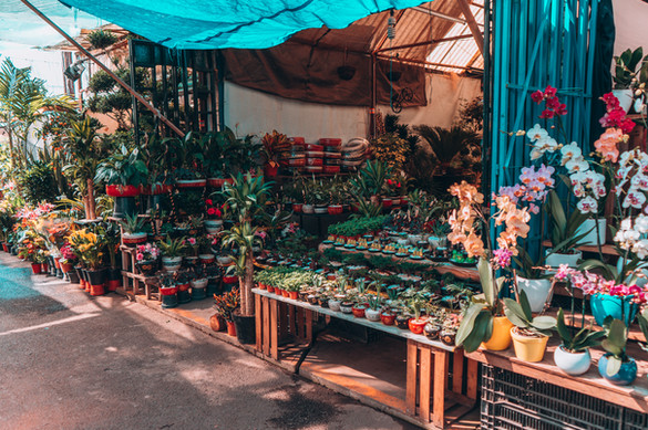 The flower market in Xochimilco has anyt