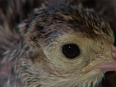 """My Life As A Turkey"" [Video]"