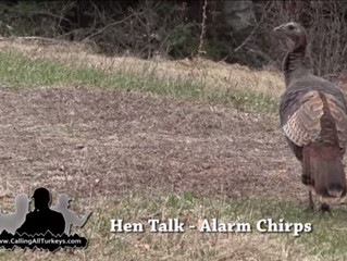 """Alarm Chirps"" - Hen Talk [Video]"