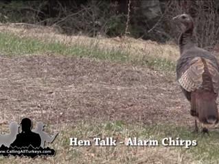 """Alarm Chirps"" - Hen Talk [Video]"