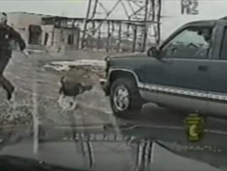 When Turkeys Attack...The Cops!