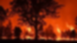 fire .png