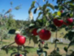 autumn harvest.jpg