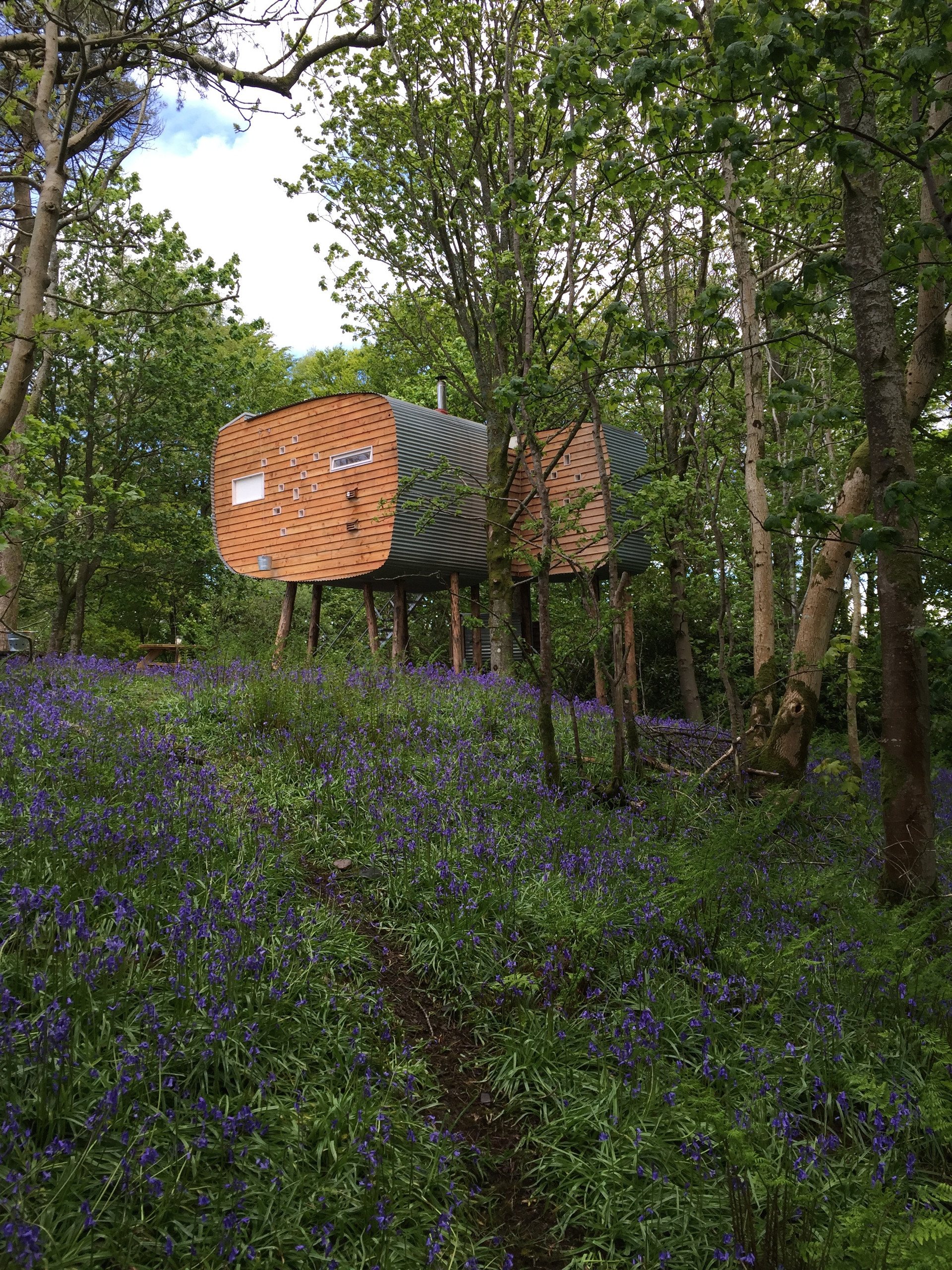 Brockloch Treehouse, exterior with bluebells