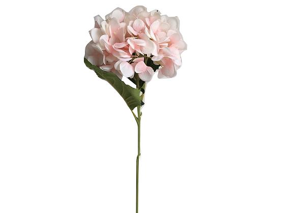 Hortensias rosado bebe