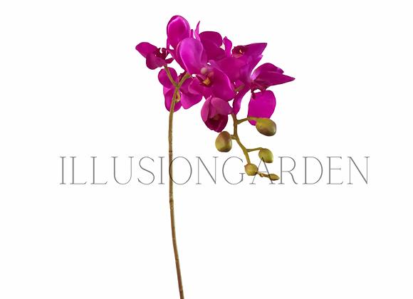 Orquidea Tallo púrpura