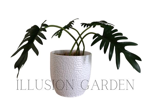Planta Philo con maceta ceramica blanca 20 X20