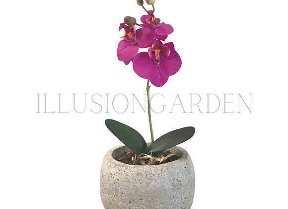 Mini Orquidea Phaloenopsis fucsia con maceta cerámica acabado piedra ploma