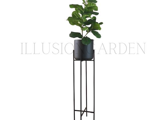Ficus Lyrata Maceta Cerámica Negra D 19 cm c/pedestal negro H 82 cm