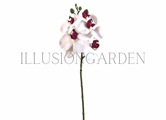 Orquídea Tallo phaloenopsis blanco / fucsia  45 cm