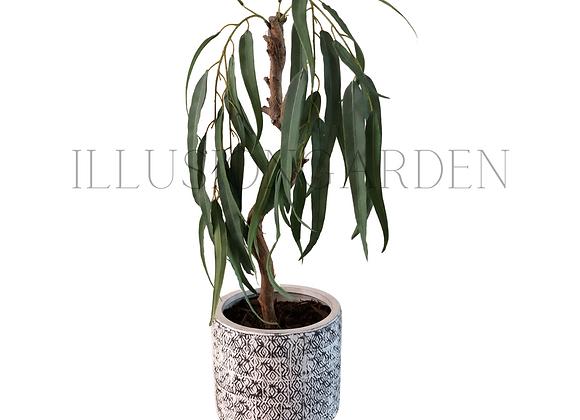 Planta Colgante Eucalipto