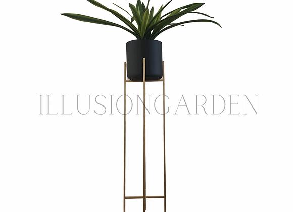 Planta Cymbidium con Maceta Cerámica Negra D 19 cm c/pedestal dorado