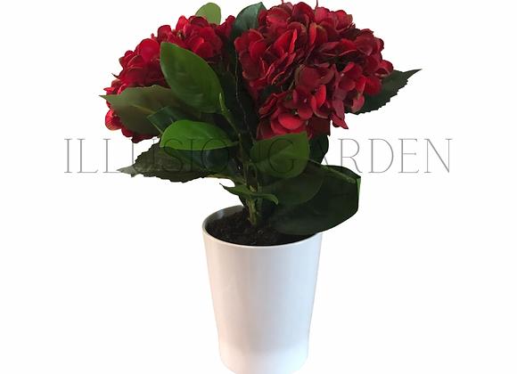 Planta de Hortensias rojas