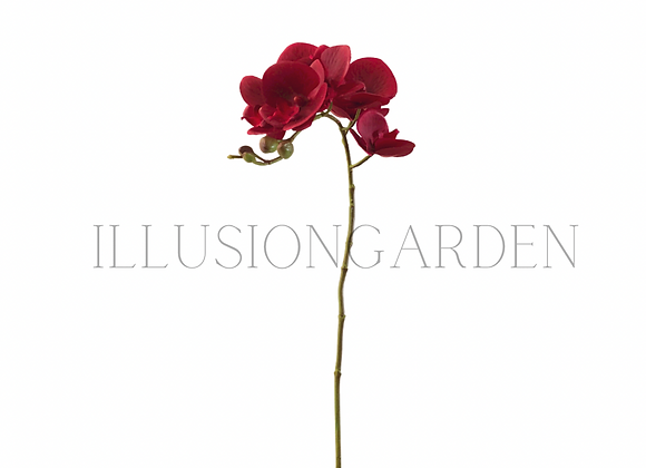 Orquídea Tallo phanoenopsis roja