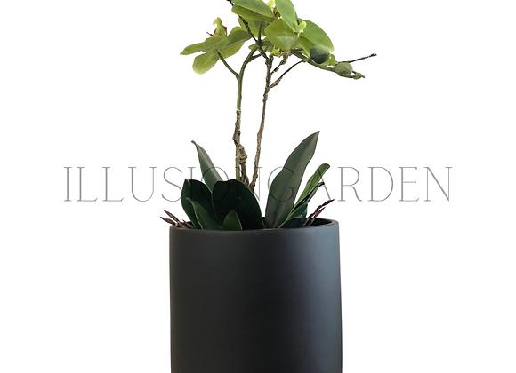 Orquídea verde con maceta negra 19x19 cm