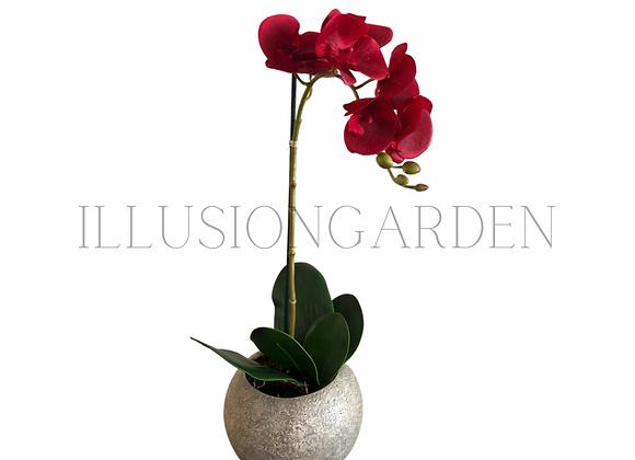 Planta Orquídea roja en maceta redonda
