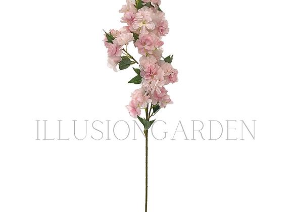 Sakura rosado