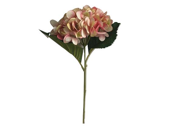 Hortensias rosada amarillo