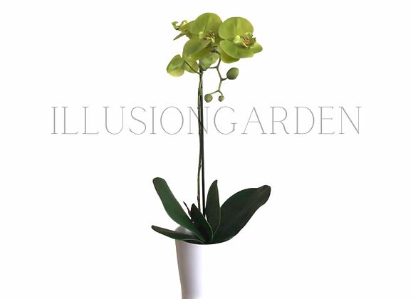 Orquídea verde en maceta blanca. Planta artificial