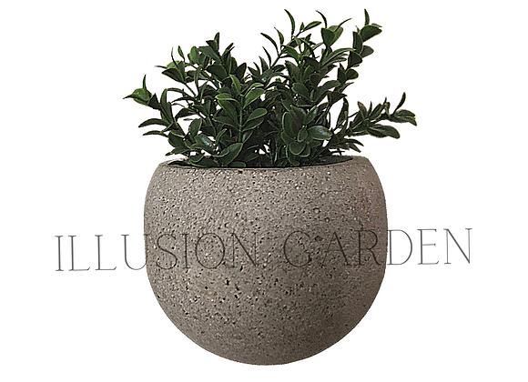 Planta Boj con maceta cemento aireado