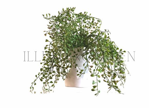 Planta artificial  Boxwood Seed en maceta blanca.
