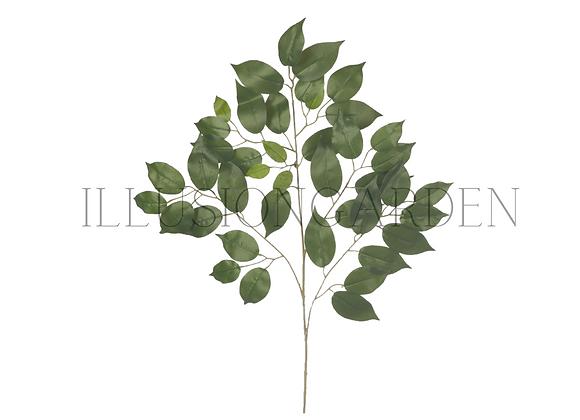 Rama de Ficus 42 Hojas